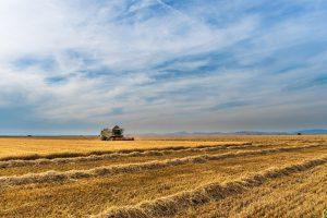 Rusza nabór wniosków o dofinansowanie małych gospodarstw – handel detaliczny
